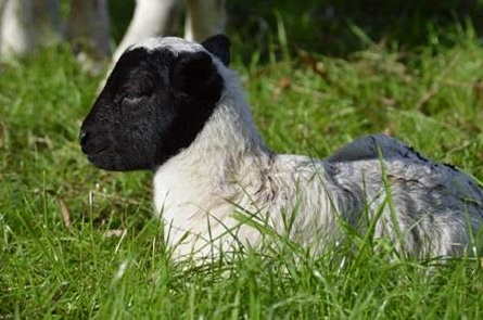 Cute and Cuddly farm animals