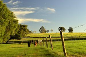 Western Australian Family Friendly Farm Stay