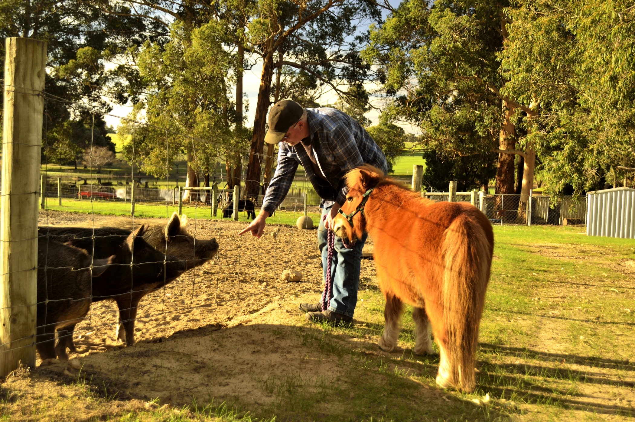 Minature ponies and a real farm experience at Southern Forest Farm Stay