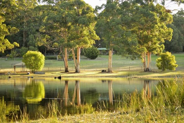 Peaceful Rural views at Southern Forest Farm Stay