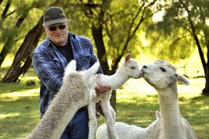 Farm Stay Perth Friendly Farm Animals Pemberton Accommodation