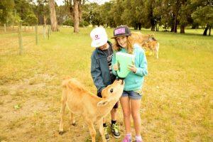 Friendly Farm Animals Southern Forest Accommodation Farmstay Perth
