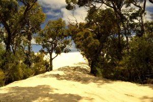 Yeagarup Dunes Southern Forests