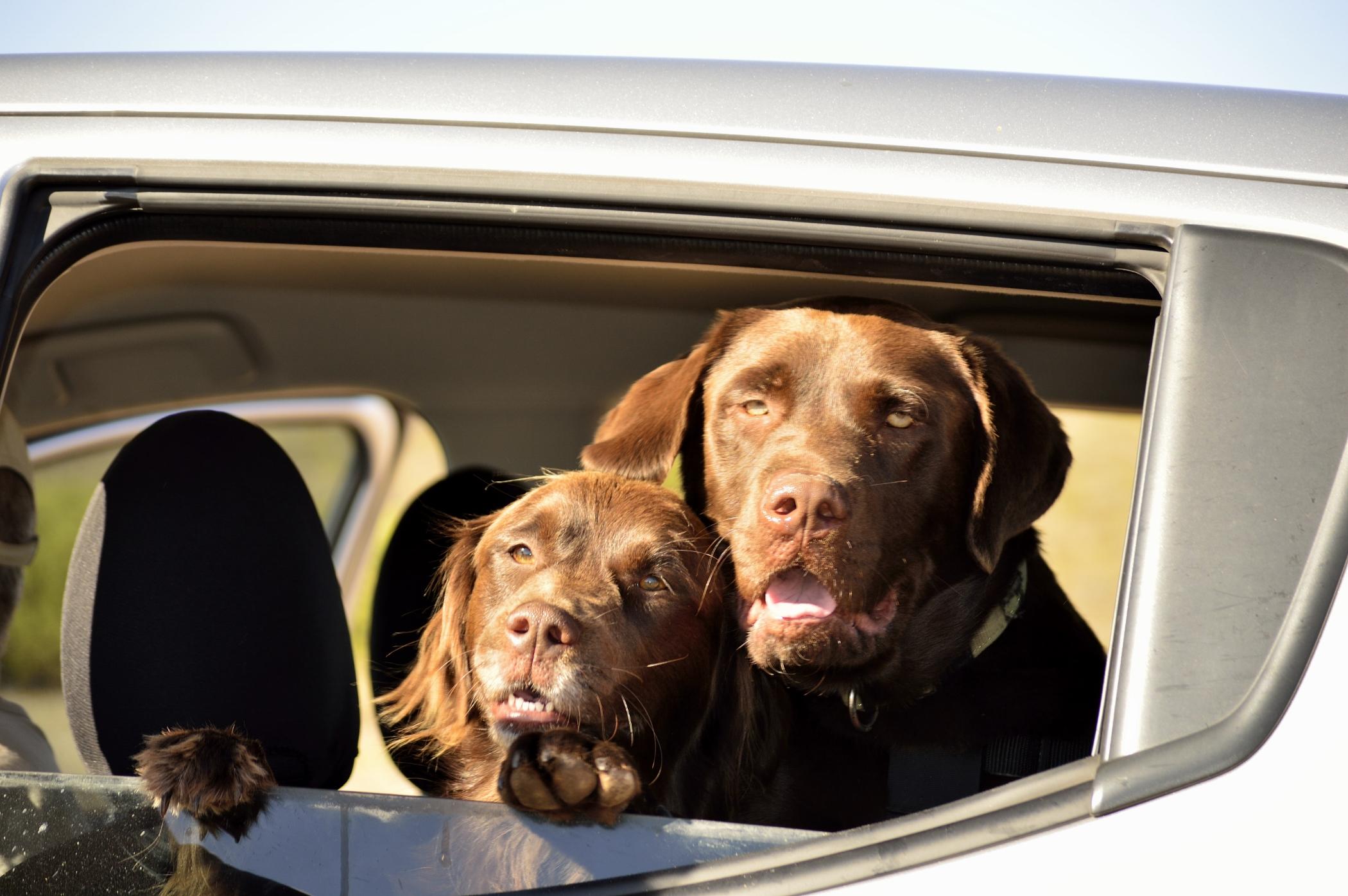 Dog Friendly Holidays Perth Farm Stay