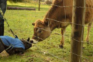 Dog Friendly Manjimup Accommodation Farm Stay
