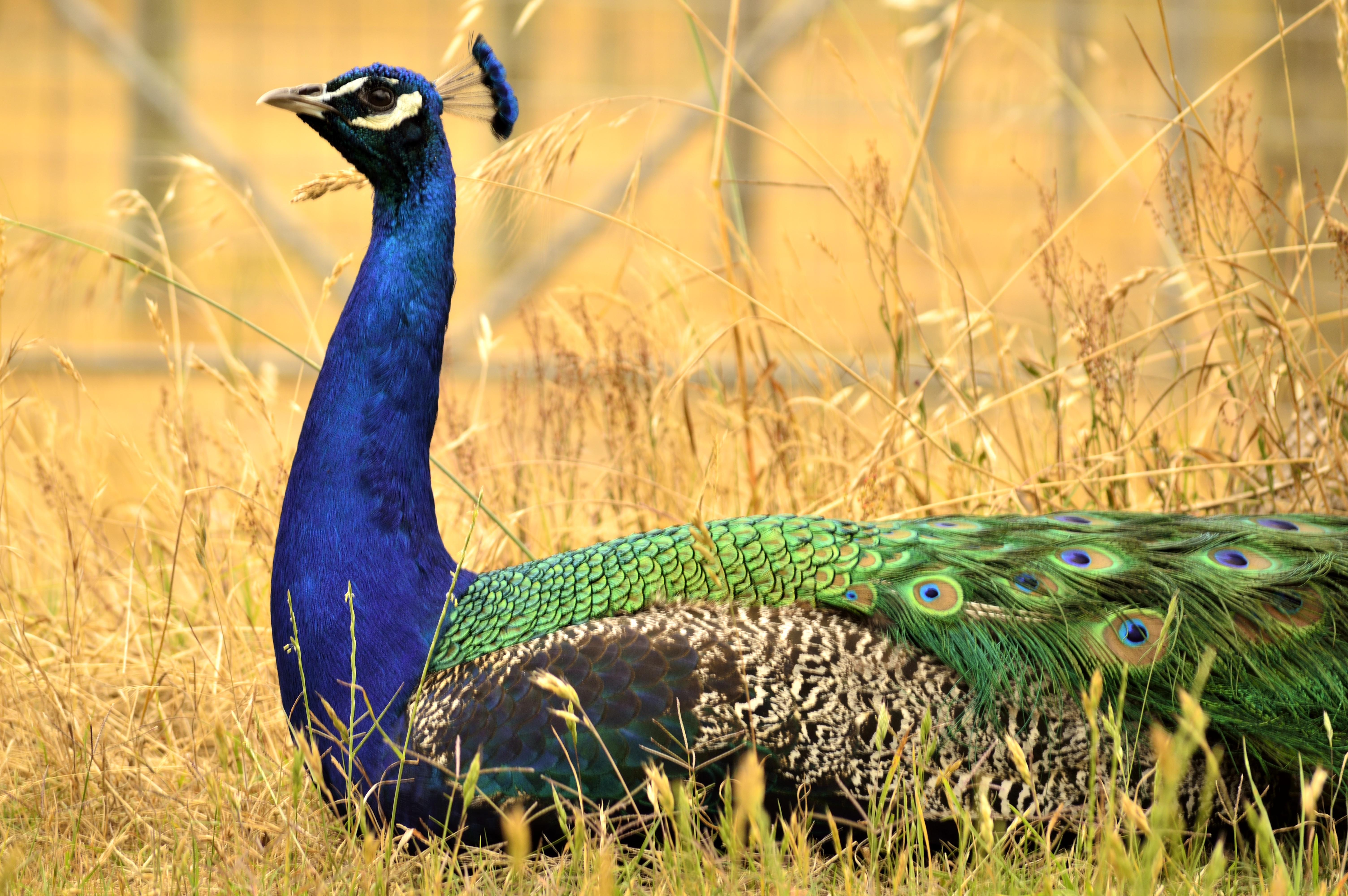 Exotic birds Pemebrton Farm Stay Accommodation