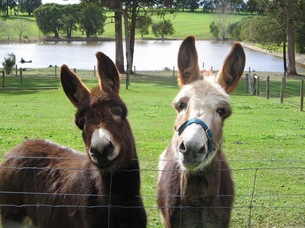 Friendly Farm Stay Animals Pemberton Family Accommodation