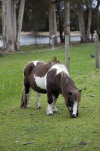 Friendly Farm Animals Perth Farm Stay